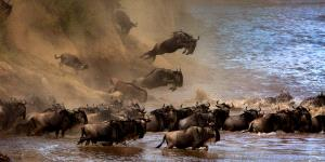 Temasek Photo Circuit Bronze Medal - Sergey Agapov (Russian Federation) <br /> The Great Migration Of Wildebeest 2