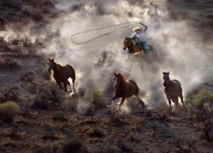 Temasek Photo Circuit Gold Medal - Shiu Gun Wong (Hong Kong)  Catching Three Horses