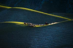 Temasek Photo Circuit Merit Award - Deying Huang (China) <br /> Grazing 2