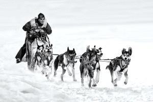 Temasek Photo Circuit Merit Award - Kam Chiu Tam (Canada)  Dogsled Racing