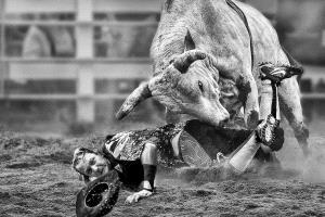 Temasek Photo Circuit Merit Award - Kam Chiu Tam (Canada) <br /> The Mad Bull