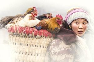 PSA HM Ribbons - Lizhen Pan (China) <br /> Go Fair