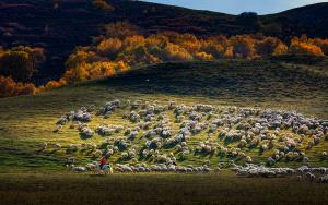 Temasek Photo Circuit Silver Medal - Shuping Zhang (China)  Herds