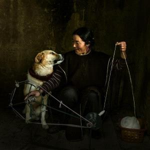 Temasek Photo Circuit Merit Award - Yunhui Dong (China) <br /> Companion