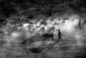 Temasek Photo Circuit Silver Medal - The Eng Loe Djatinegoro (Indonesia)  Shadow Leader Bw