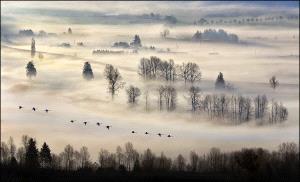 Temasek Photo Circuit Merit Award - Miranda Siu (Canada) <br /> Into The Mist