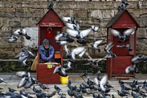 Temasek Photo Circuit Merit Award - Mustafa Evirgen (Cyprus) <br /> Pigeon Man