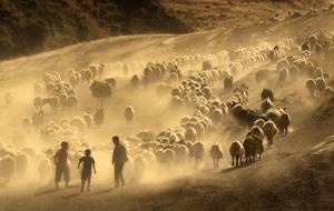 PhotoVivo HM - Aysu Bilgic (Turkey)  To Pastures New