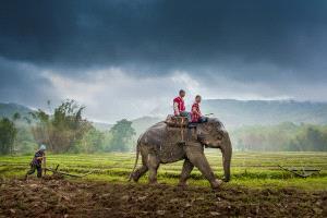 Temasek Photo Circuit Gold Medal - Sukrit Hirunsaraphong (Thailand) <br /> Life