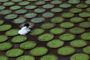 Temasek Photo Circuit Merit Award - Deqiang Zhang (China) <br /> Sun Tea