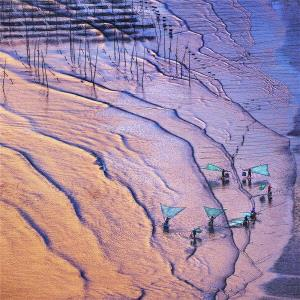 Temasek Photo Circuit Merit Award - Xiaohong Xu (China)  Beach Comb