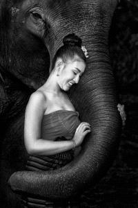 Temasek Photo Circuit Gold Medal - Foo Say Boon (Malaysia) <br /> Lady Love Elephant