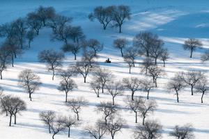 Temasek Photo Circuit Bronze Medal - Ming Li (China)  Snow Forest