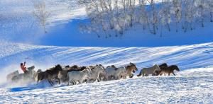 Temasek Photo Circuit Bronze Medal - Yigan Liang (China) <br /> Spur Horses In Iceland
