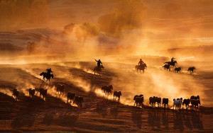 Temasek Photo Circuit Merit Award - Tracy Shuxi Feng (USA)  Horse Racing At The Frontier