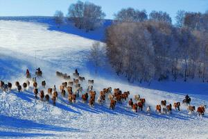 IUP Honor Mention - Tongqing Su (China) <br /> Galloping Horses In Snow