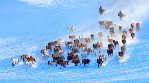 Temasek Photo Circuit Bronze Medal - Guangqi Zhang (China) <br /> Horses Galloping