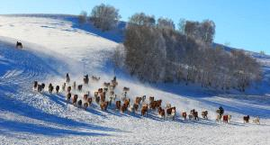 Temasek Photo Circuit Silver Medal - Hui Wang (China)  Horses Galloping In Snowland