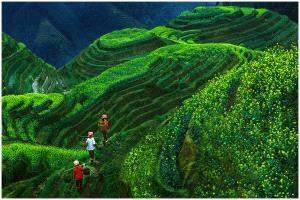Temasek Photo Circuit Merit Award - Thomas Lang (USA) <br /> Longji Terrace