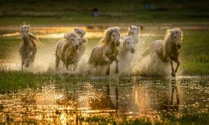 PhotoVivo Gold Medal - Mingyou Zhang (China)  Greet The Sunrise