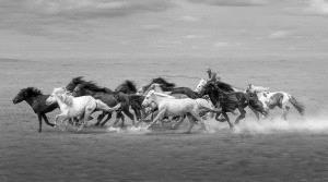Temasek Photo Circuit Bronze Medal - Mingyou Zhang (China) <br /> Gallop