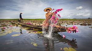 APAS Honor Mention - Tan Tong Toon (Malaysia)  Water Lily Farmer