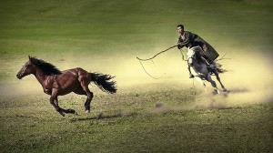 PhotoVivo Honor Mention - Chen Ni (China) <br /> Lasso A Horse