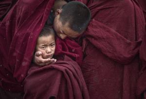 TPC Merit Award - Jianyong Xu (China) <br /> Little Lama