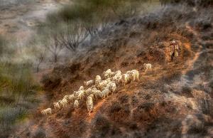 TPC Silver Medal - Wendy Wai Man Lam (Hong Kong)  Mountain Goats