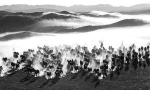 PSA HM Ribbons - Zhemin Li (China) <br /> Ten Thousand Steeds Gallop