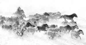 APAS Silver Medal - Mingyou Zhang (China)  Walk In Snow