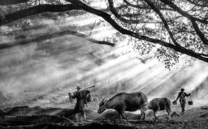 TPC Merit Award - Chin Leong Teo (Singapore)  Farmer And Buffaloes Bw