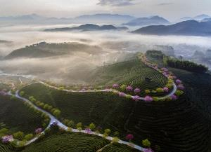 TPC Silver Medal - Shimin Wang (China)  The Morning Light Of The Tea Garden