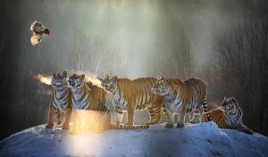 TPC Merit Award - Runxing Sun (China)  Look At Fiercely As A Tiger Does