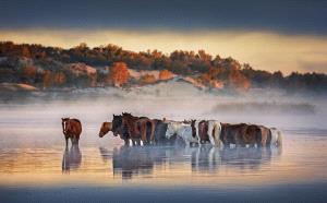 APAS Honor Mention - Qiang Liu (China)  Horse Sunrise