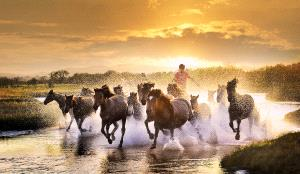 TPC Silver Medal - Mingqin Yin (China) <br /> The Horse Set Foot In The Sunset