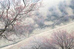 APAS Honor Mention - Darong Hao (China)  Picturesque Spring